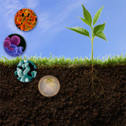Fermentation + Macrobiotic Principles = Eat Local & Seasonal Microbes by Cynthia Briscoe